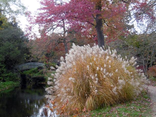 Visite guidée de l'arboretum de la Vallée aux Loups