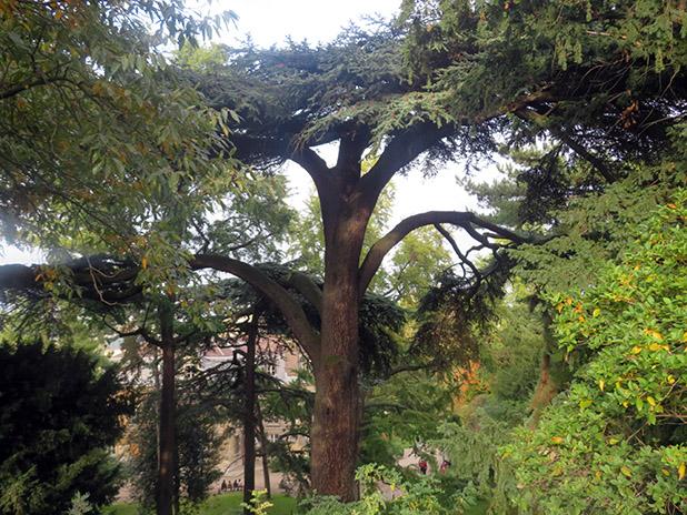Les arbres remarquables du jardin des plantes
